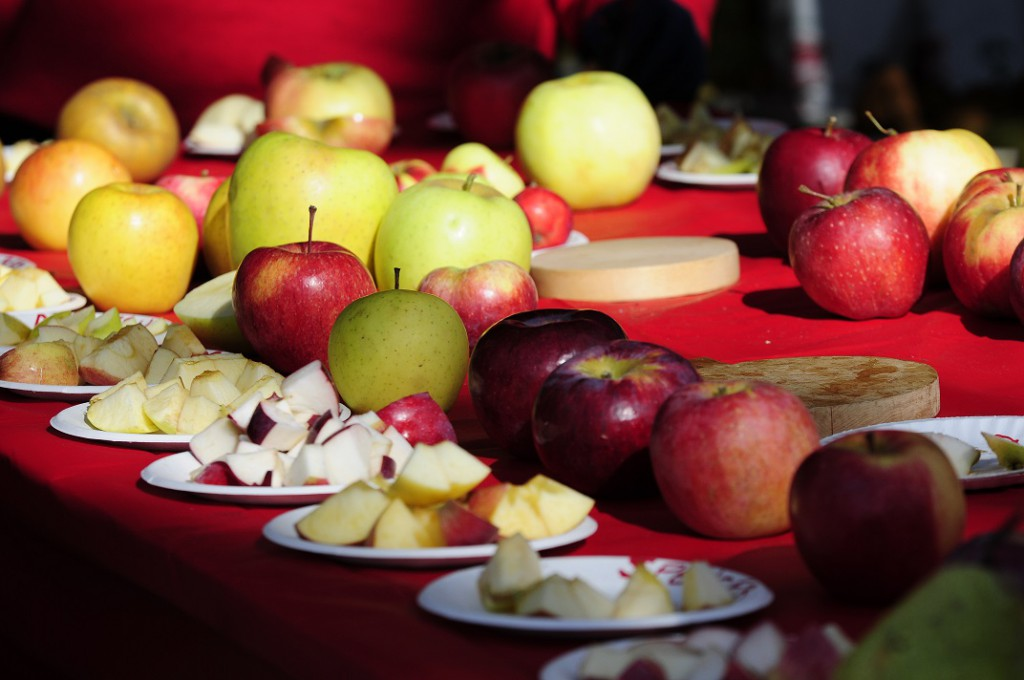 apple tasting at clarkdale 1 1024x680