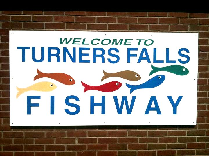 Turners Falls Fish Way